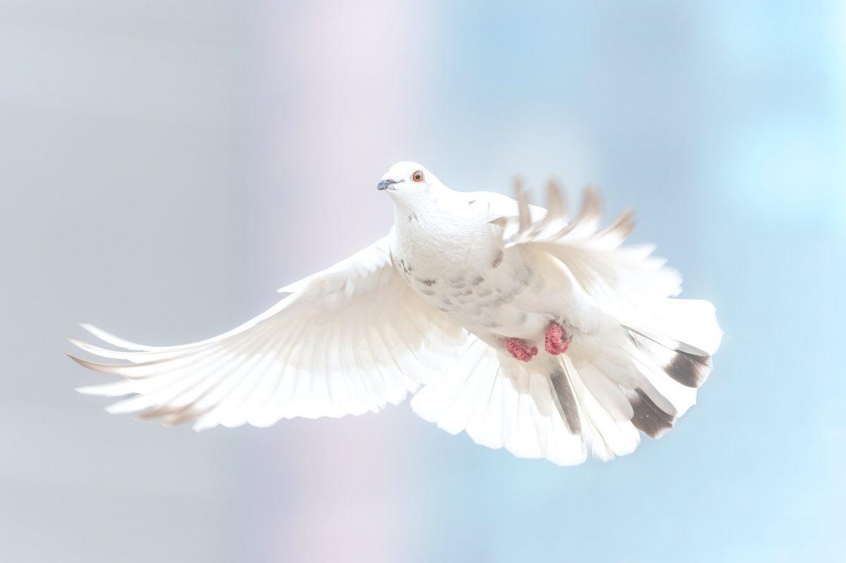 Une aspiration à la paix